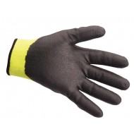 Winter Glove palm